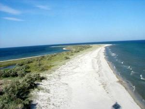 Пляж близ Скадовска. Пресная вода, сбрасываемая укрорежимом из СКК, принесла на пляжи Херсонской области зловоние и мертвых медуз